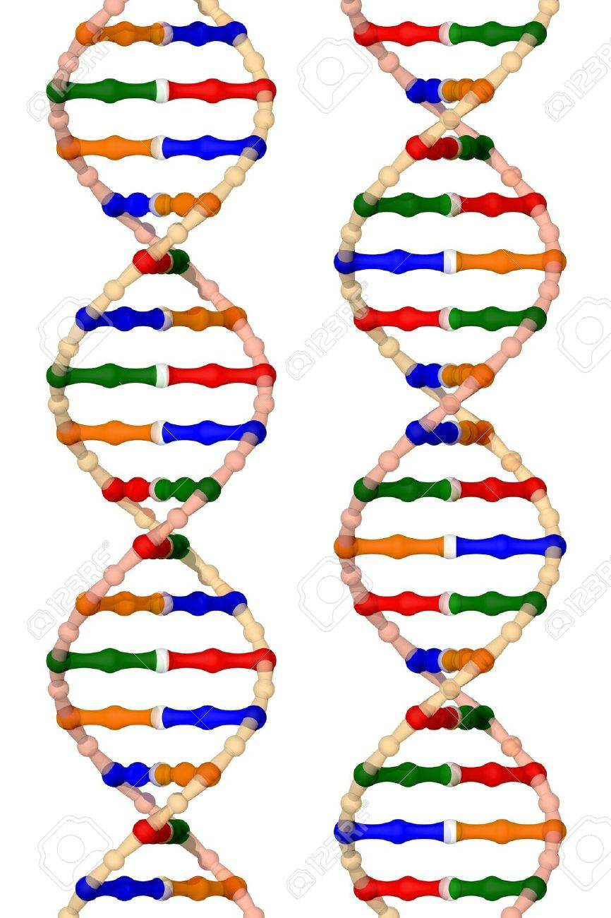 DNA helices - isolated on a white background Stock Photo - 12477612
