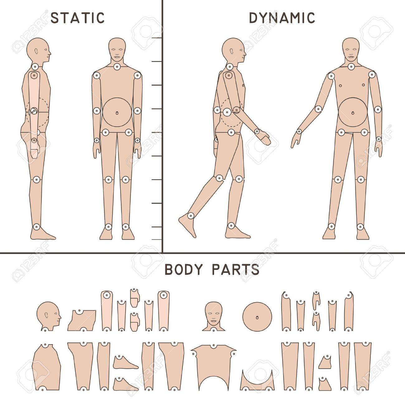 Human Body Vector Free Artists Human Body