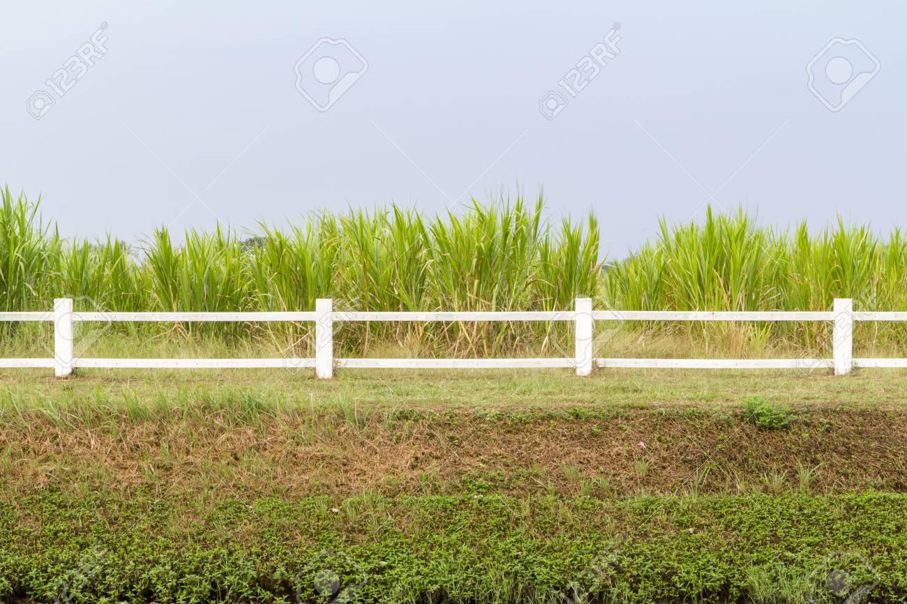 weißer zaun im grünen rasen lizenzfreie fotos, bilder und stock