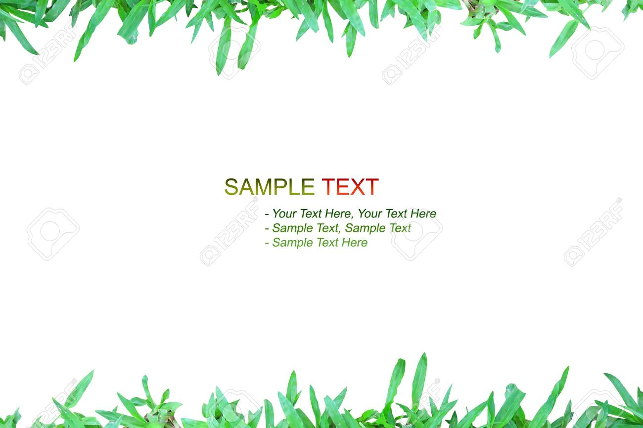 nature grass frame on white background isolated style Stock Photo - 8446106