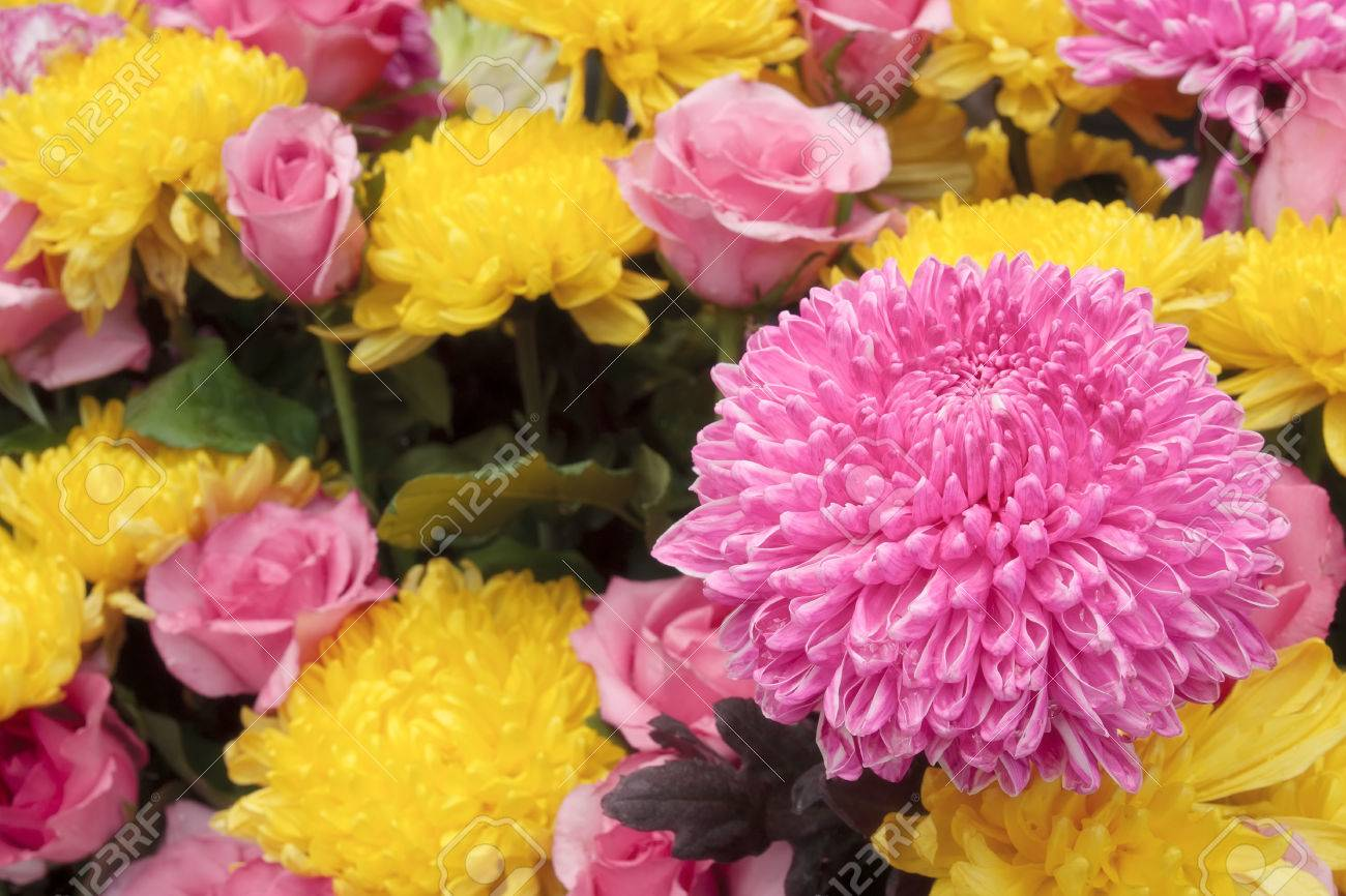 Beautiful Pink And Yellow Chrysanthemum Bouquet Colorful Flower