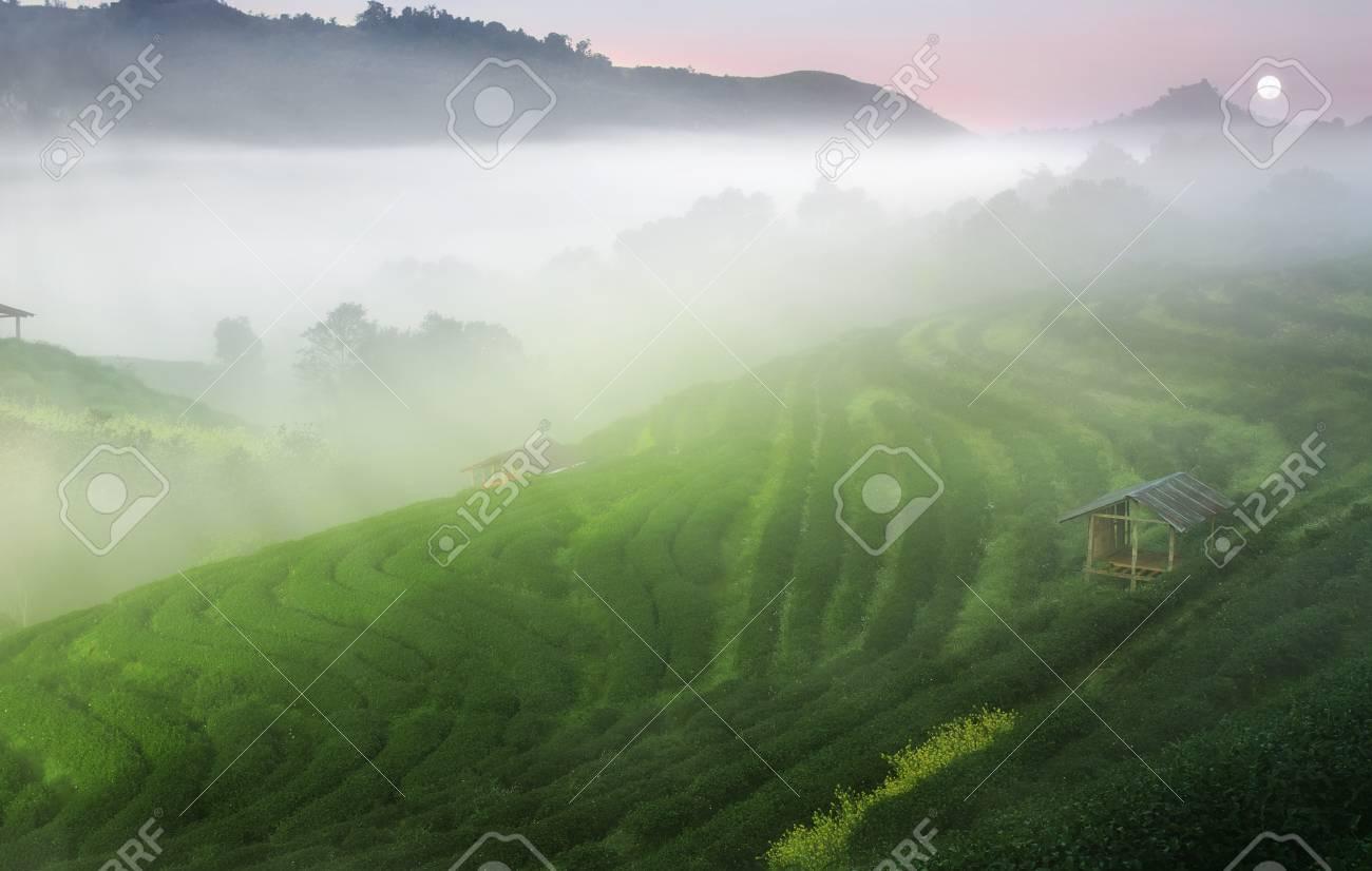 Te Verde Con Mare Di Nebbia O Nebbia Sulla Trave Alba E Il Vecchio