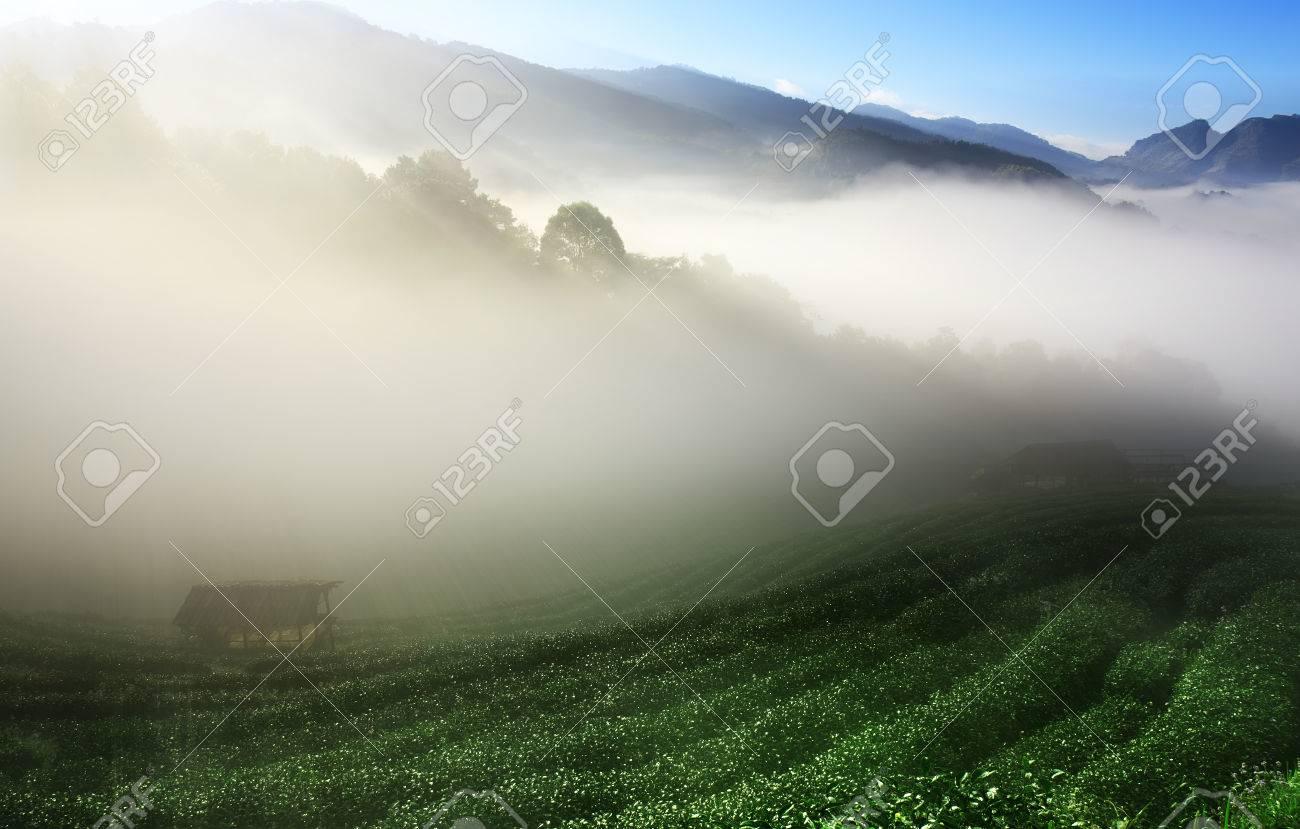 Paysage 2000 dedans paysage matin sommet de la montagne pour le thé vert avec la mer de