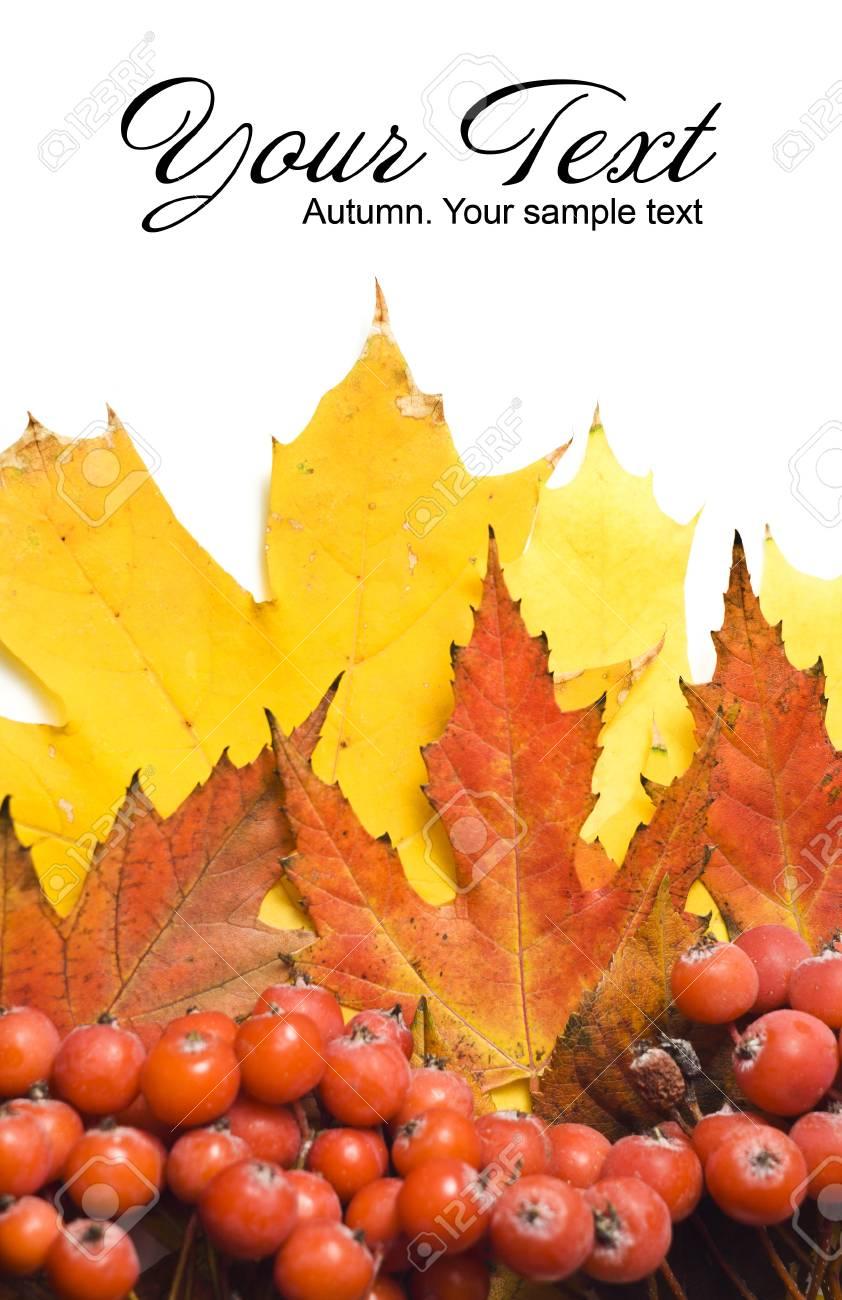 Autumn Leaves.Beautiful Abstract Fall Border Stock Photo - 8351356