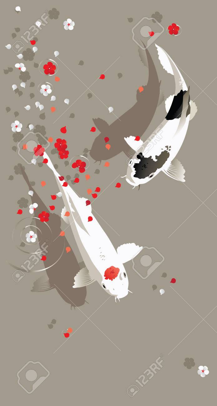 Vector illustration of traditional sacred Japanese Koi carp fish - 34219856