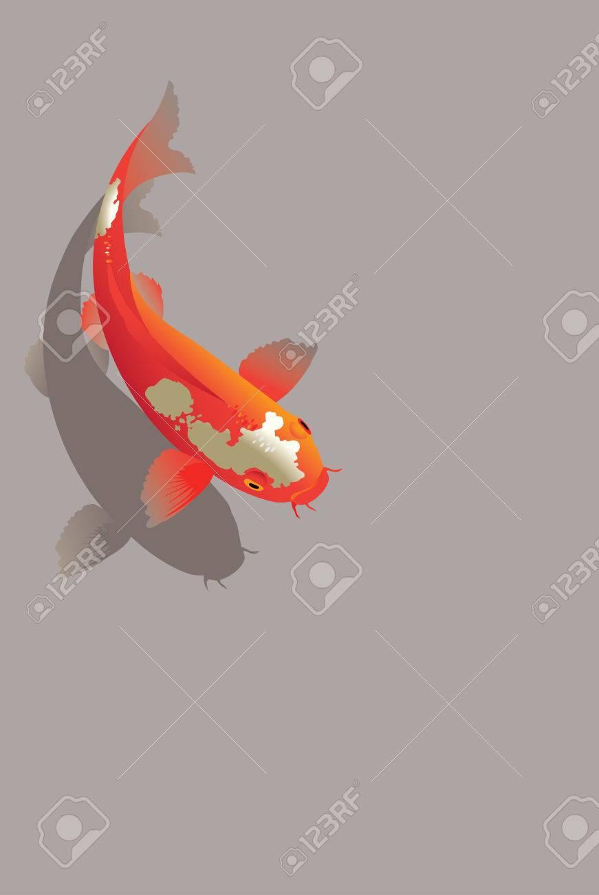 Vector illustration of traditional sacred Japanese Koi carp fish - 34219864