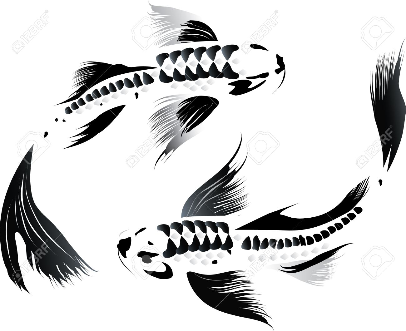 Artistic vector illustration of koi carps couple in water - 40223916