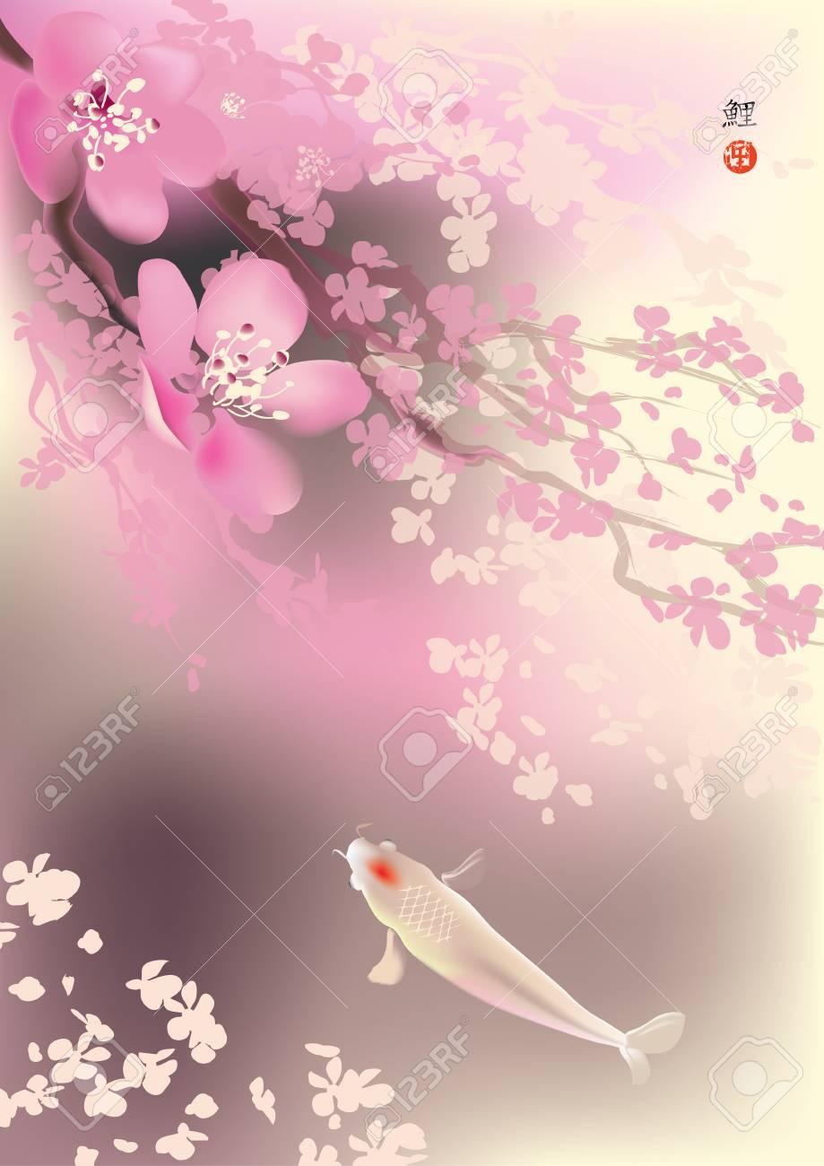 Vector illustration of sacred Koi carps and spring sacura blooming - 47860404