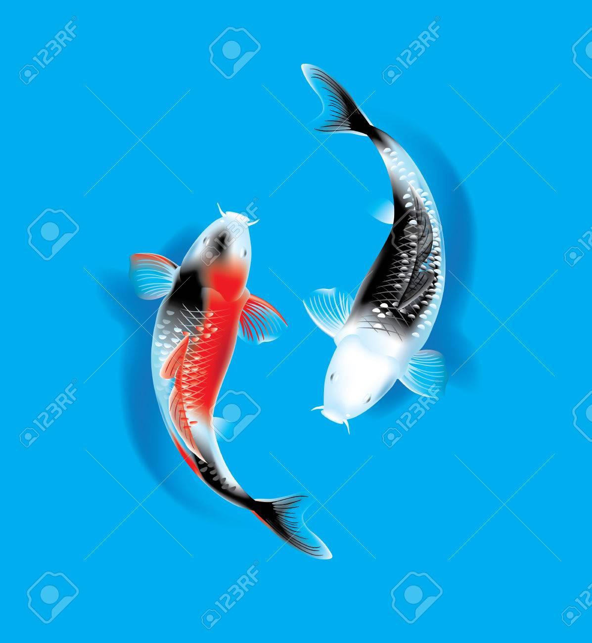 Vector illustration of traditional sacred Japanese Koi carp fish - 52899626