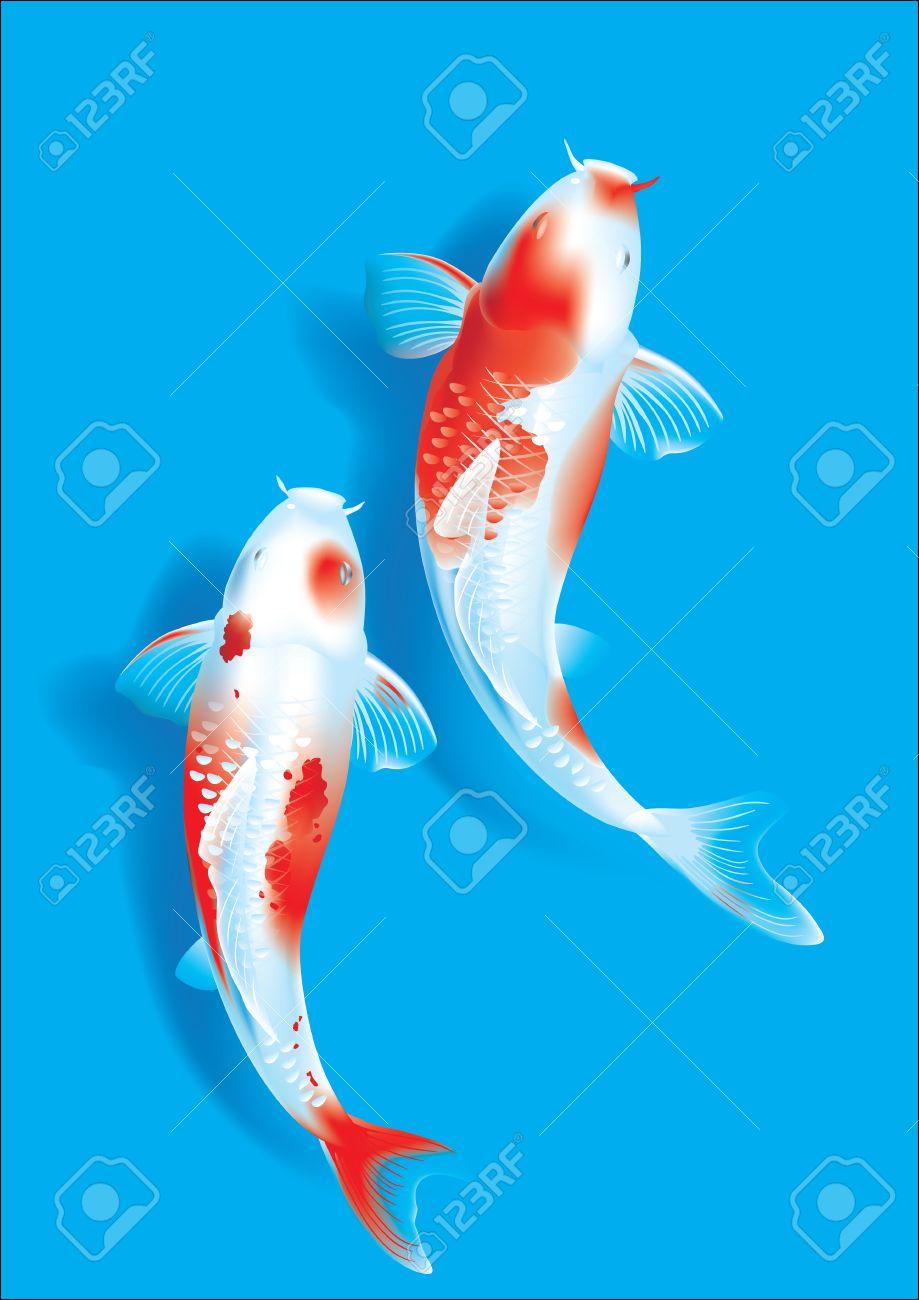 Vector Illustration Of Traditional Sacred Japanese Koi Carp Fish Royalty Free Cliparts Vectors And Stock Illustration Image 52899638