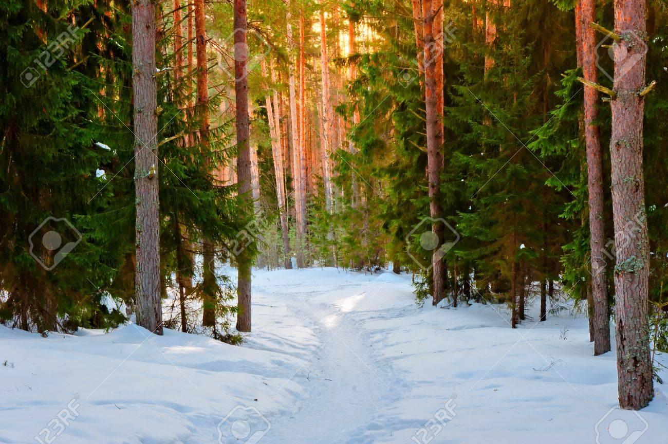 Snowy Trail Runs - run.around.aroo