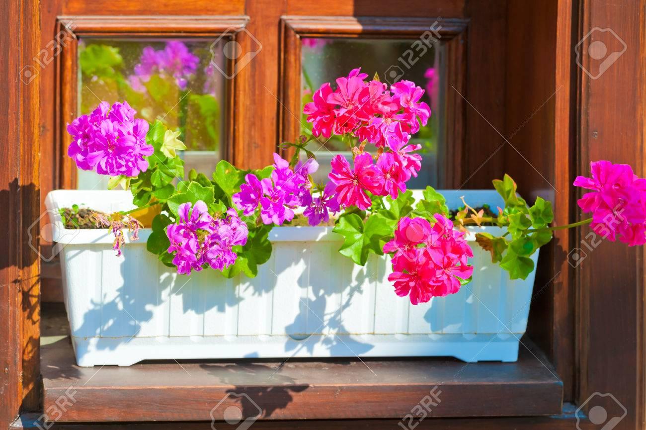 jardineras con flores de color rosa en el alfizar de la ventana foto de archivo