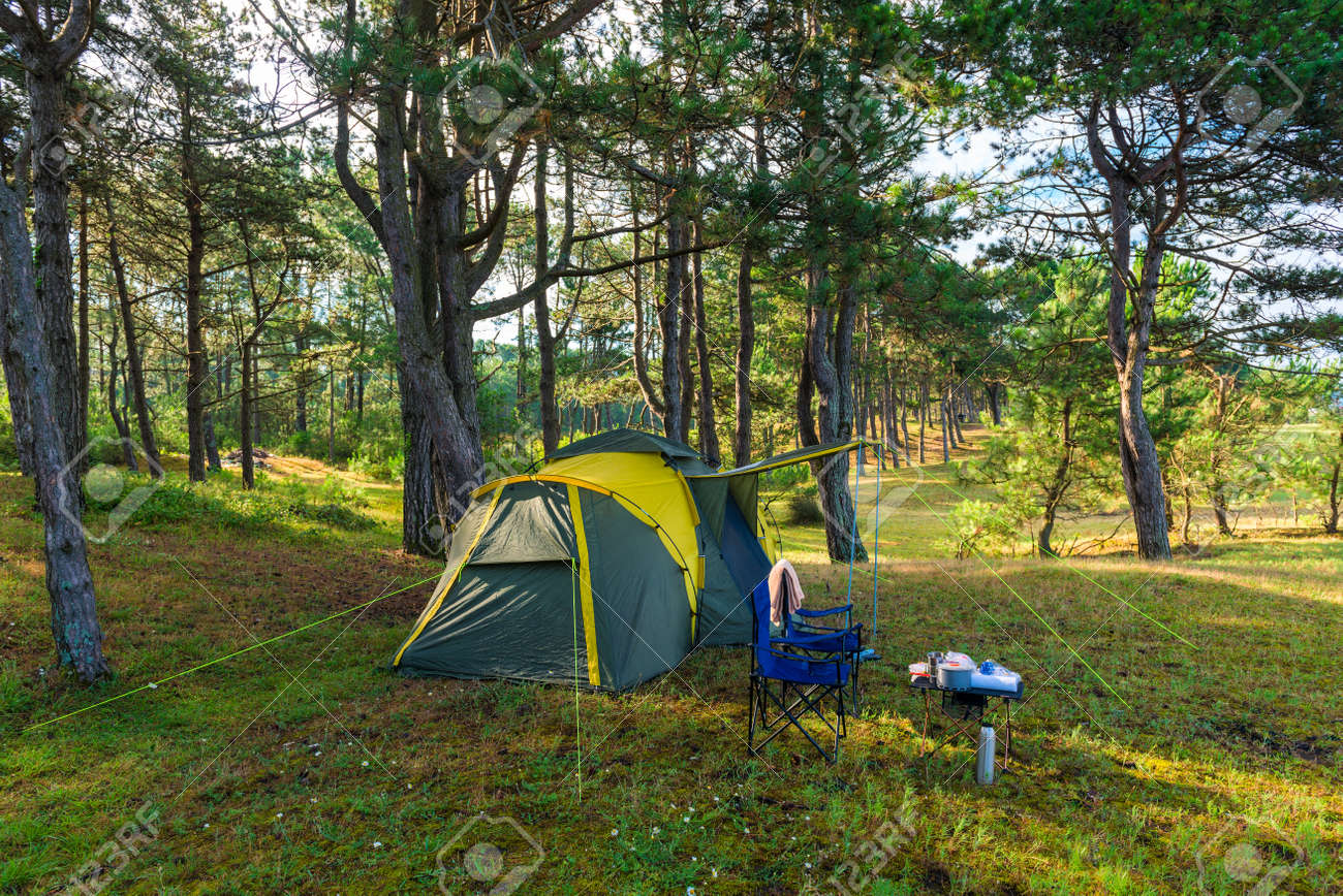 camping tent in a pine forest by the sea - 155323648