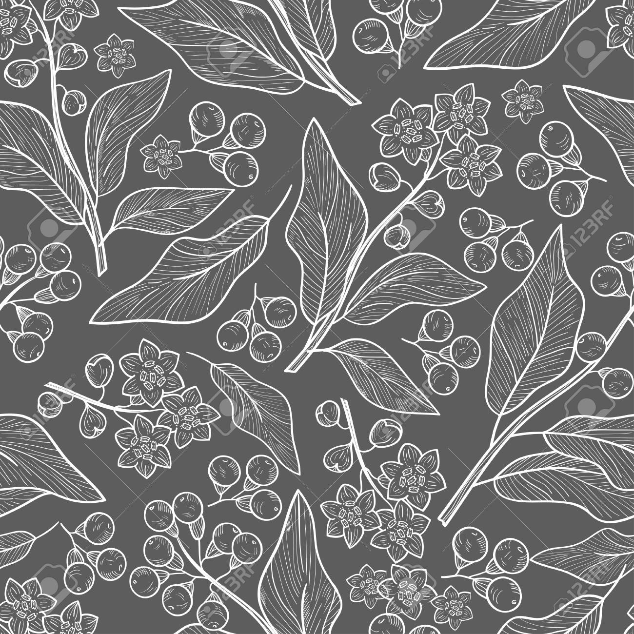 Camphor Plant Leaves Fruit Wallpaper Seamless Sketch Gray Royalty Free Cliparts Vectors And Stock Illustration Image 113562804