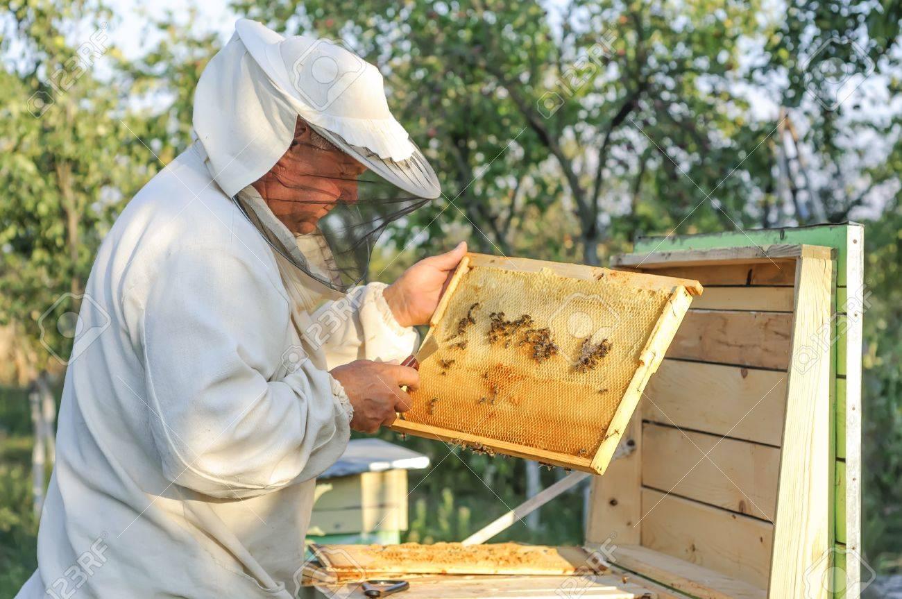Imker Arbeitet Mit Bienen Und Bienenstöcke Auf Der Imkerei. Imker ...