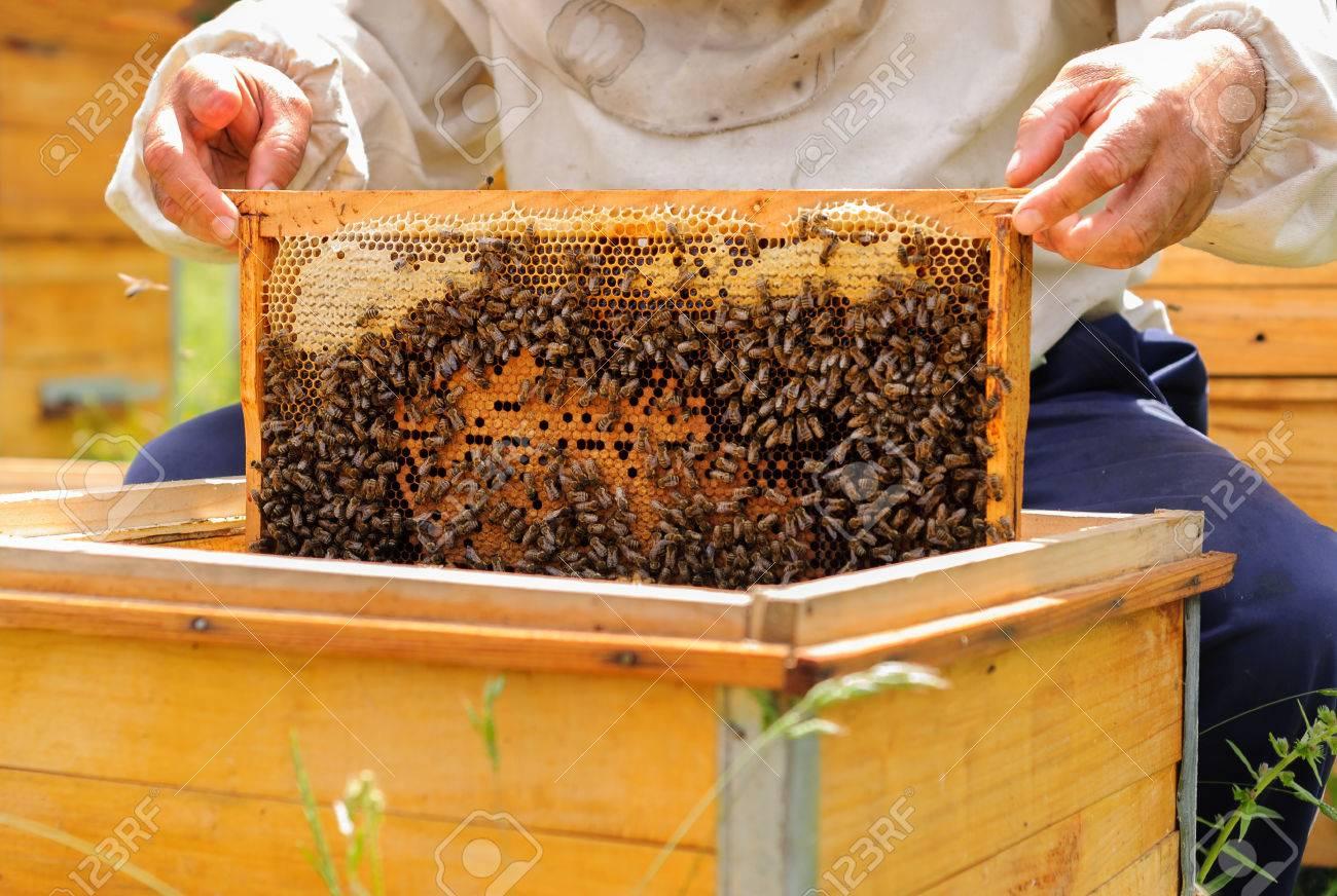 apiculteur 86