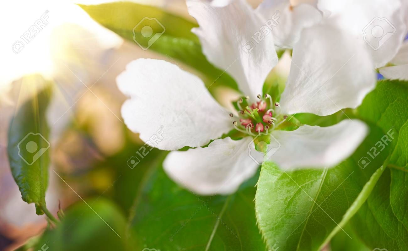 Image result for spring rebirth