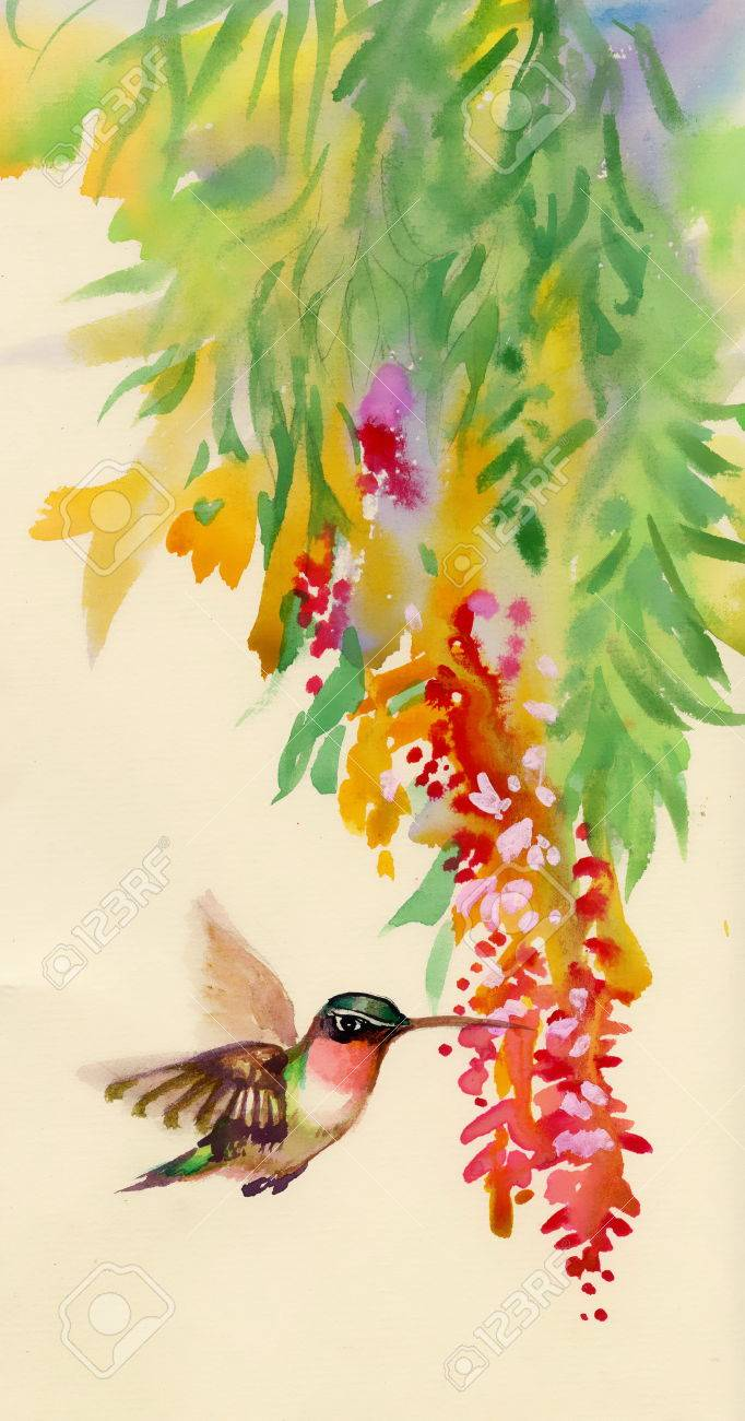 hummingbird on purple flower stock photos u0026 pictures royalty free