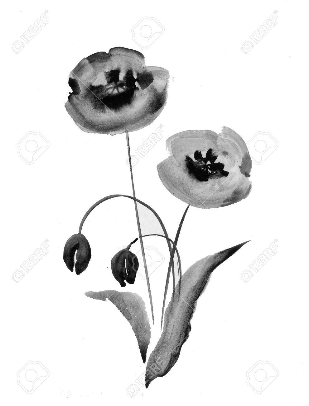 Poppy Flowers Watercolor Illustration In Black And White Stock
