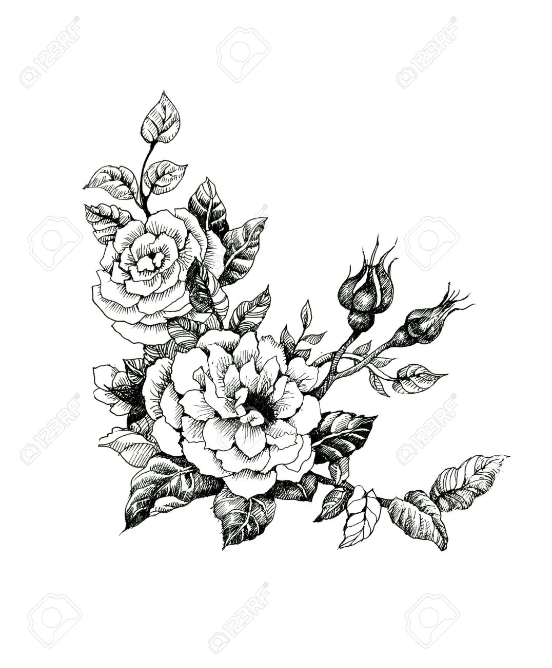 Watercolor flowers illustration in black and white