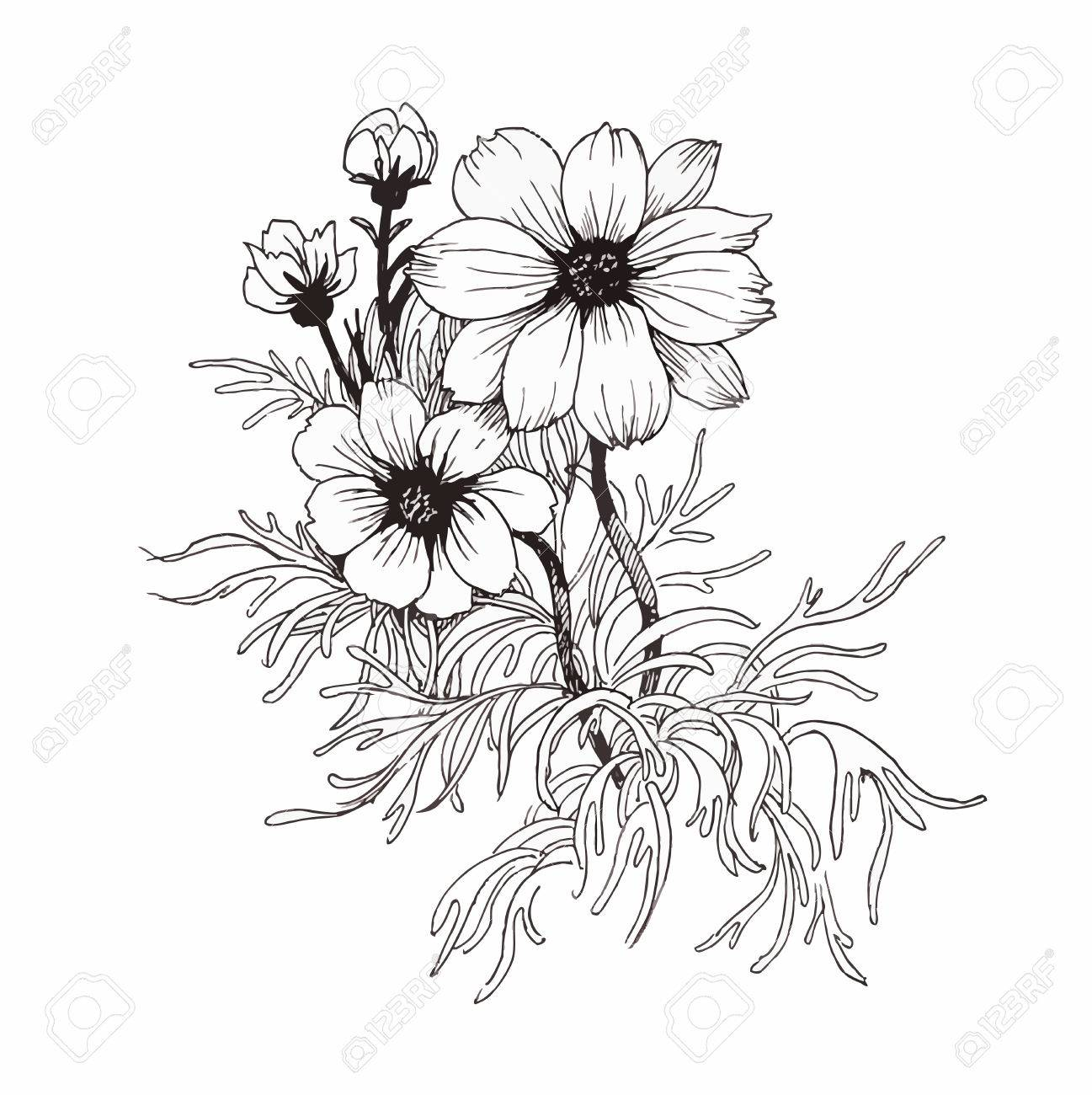 Beautiful monochrome, black and white flower isolated. Hand-drawn contour lines and strokes - 45114065