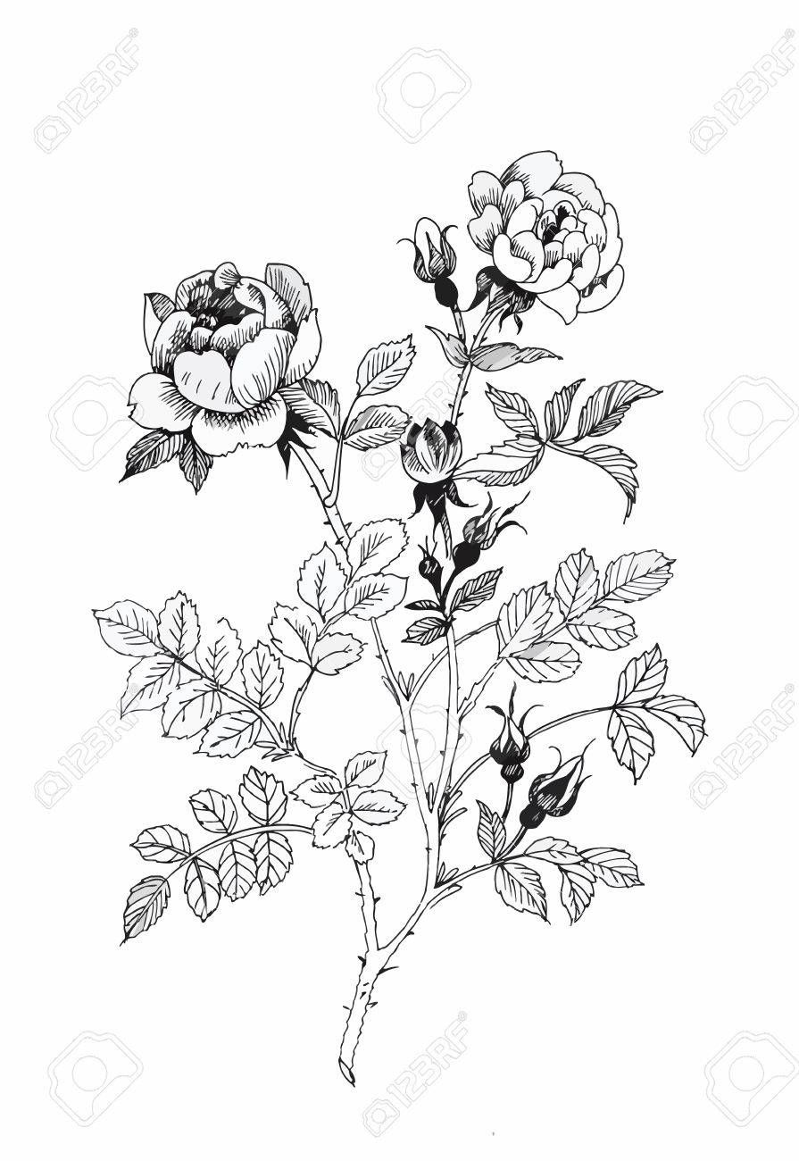 Beautiful monochrome, black and white flower isolated. Hand-drawn contour lines and strokes - 45114083