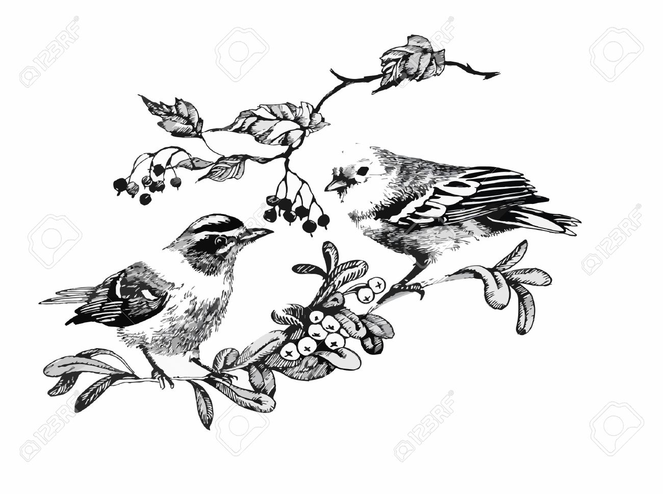 Black and white watercolor illustration of bird on twig. - 45116418
