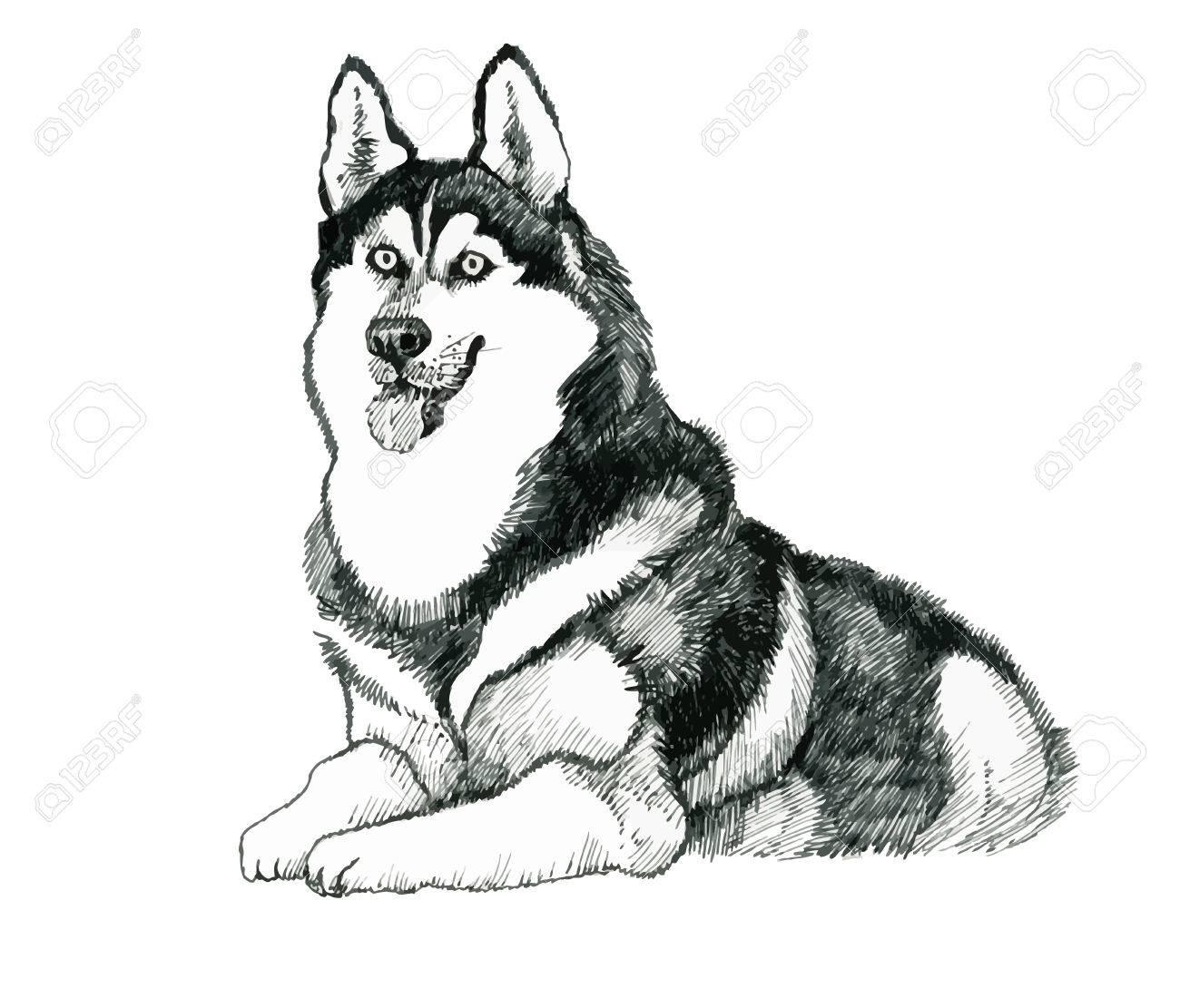 スケッチのハスキー犬の手描きイラストのイラスト素材ベクタ Image