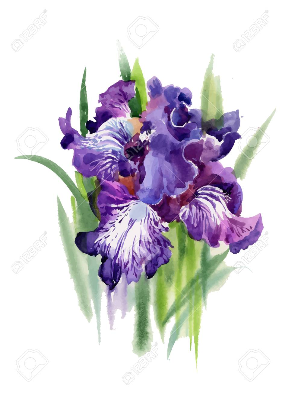 Watercolor blooming iris flowers illustration royalty free cliparts vector watercolor blooming iris flowers illustration izmirmasajfo