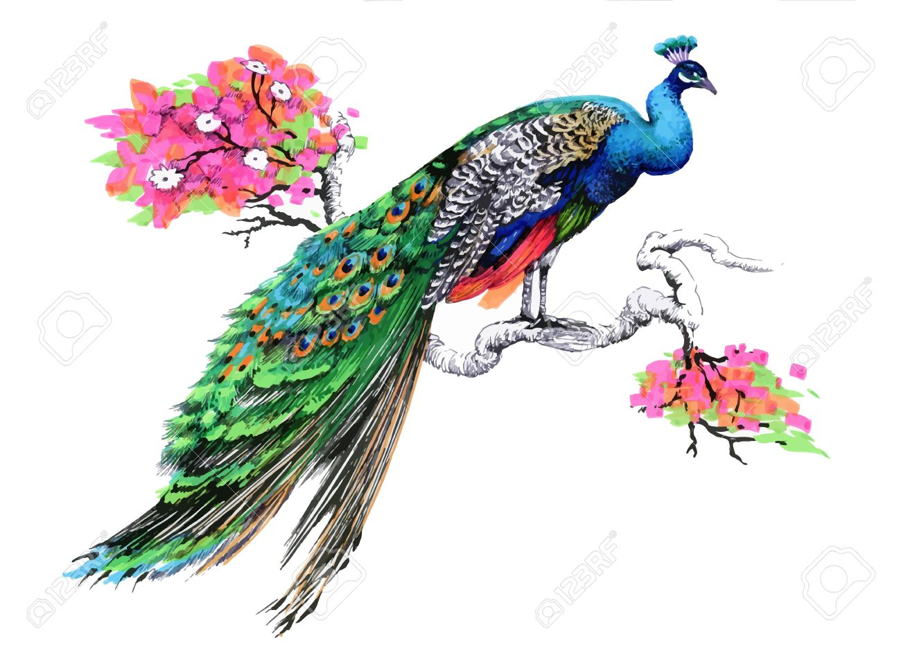 Watercolor drawing peacock on blooming tree branch on white background - 61635687