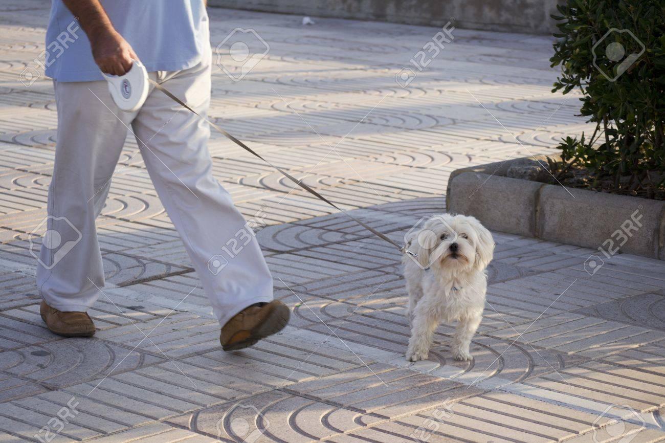 dog Standard-Bild - 10977757
