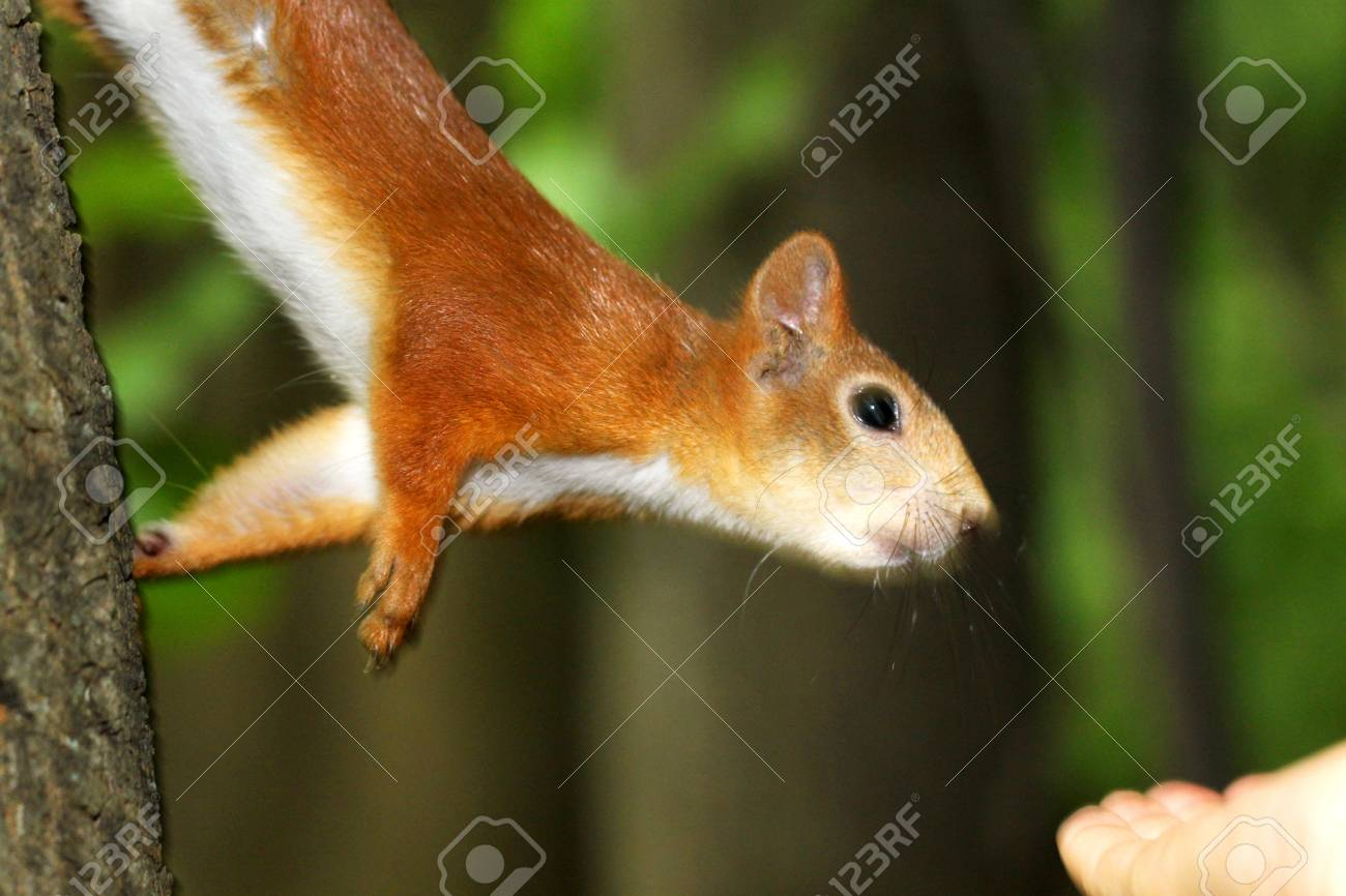 Protein reaches for the hand of a nut Stock Photo - 20849247