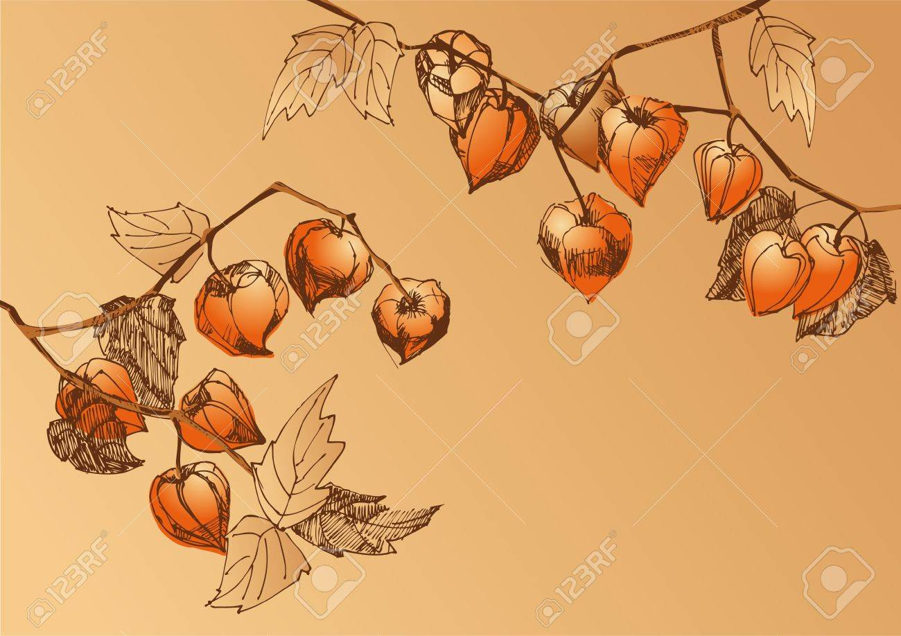 A sketch of branches with orange physalis Stock Vector - 14652413