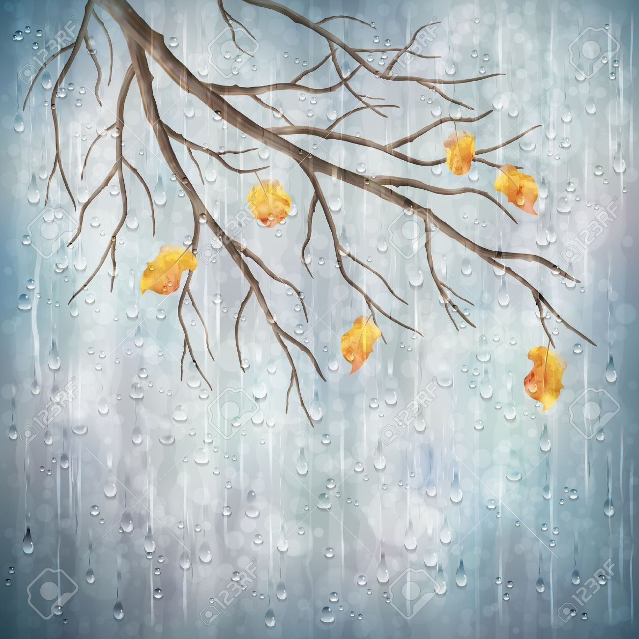 Water Drops On Yellow Leaf Wallpaper WallDevil
