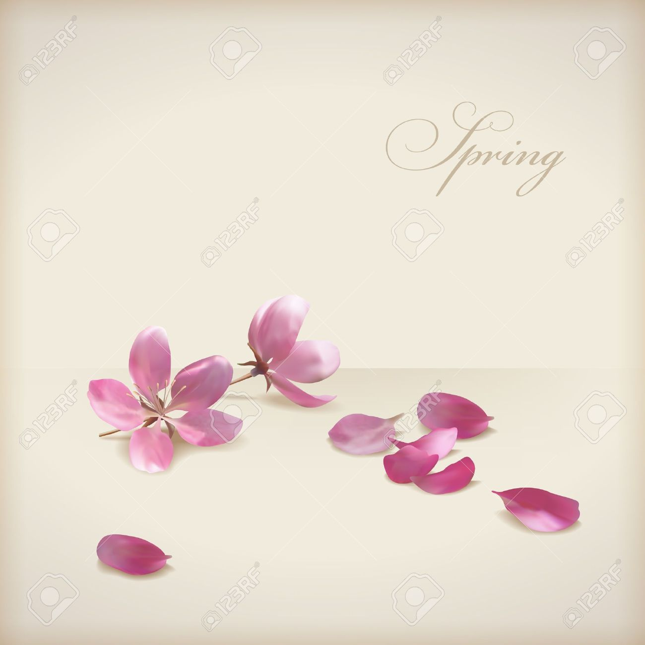 Floral vector cherry blossom flowers spring design  Pink flowers, freshly fallen petals and text Stock Vector - 17803740