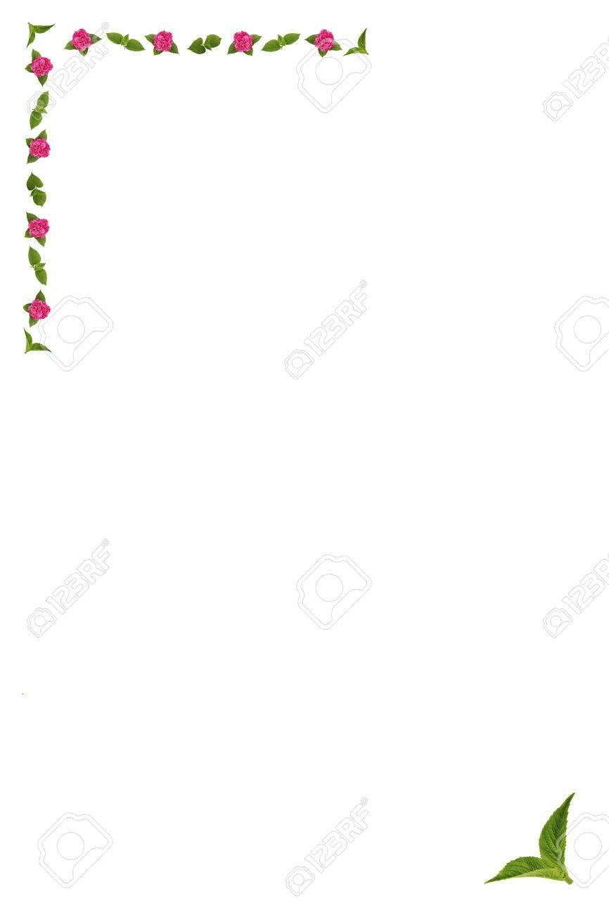 Blüten Und Blätter Der Hortensie, Der Rahmen / Grenze Lizenzfreie ...