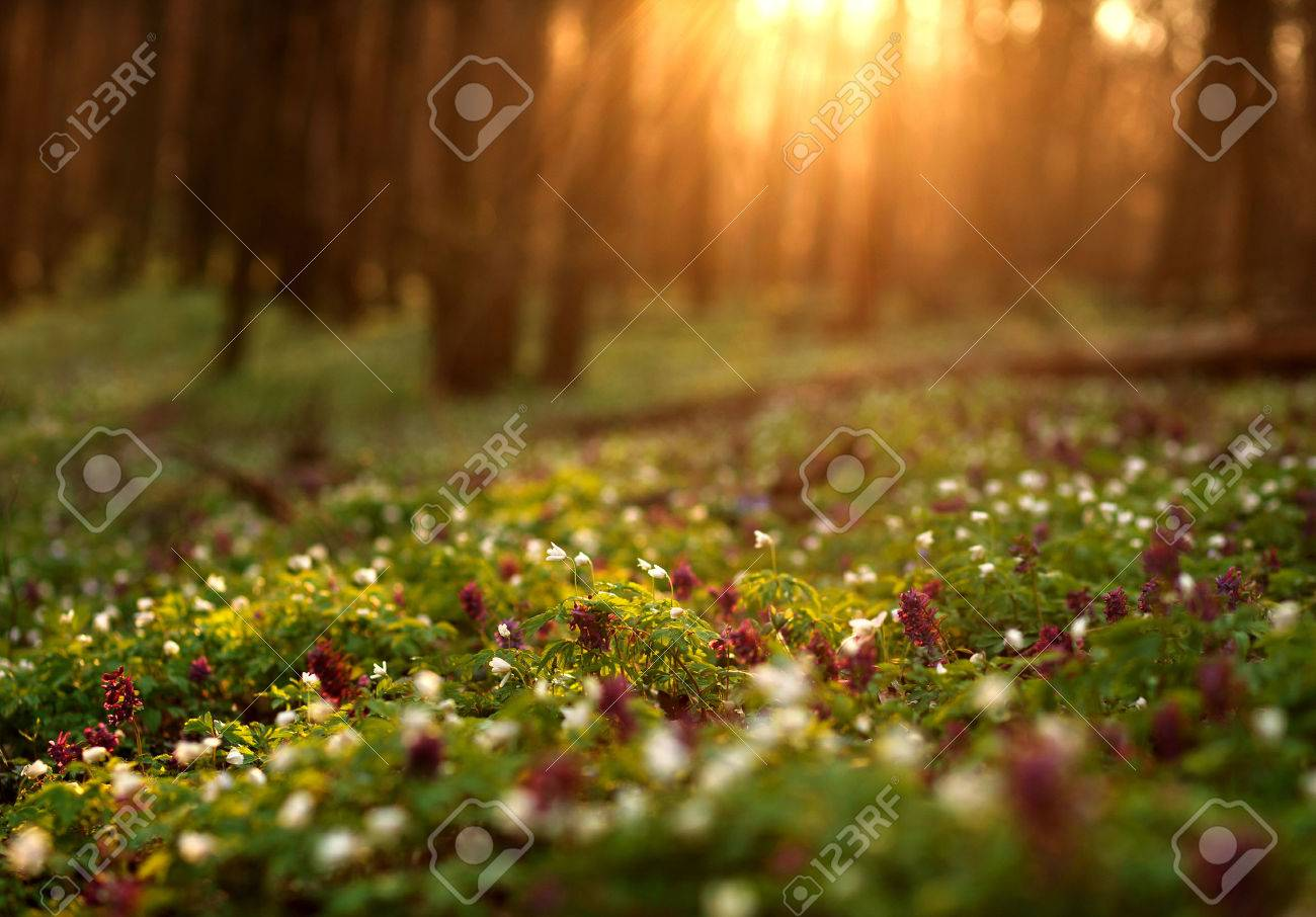 Flowering green forest on sunset , spring nature background - 53894235