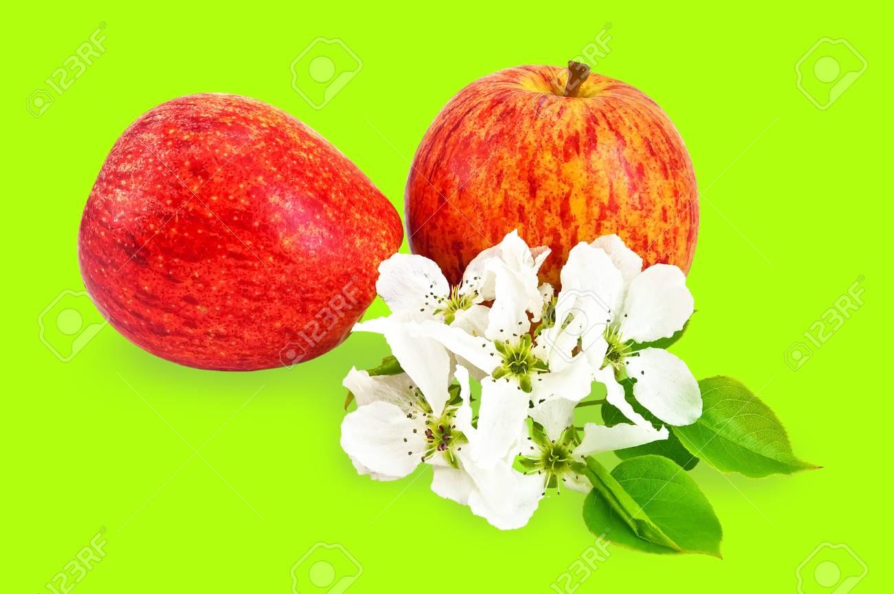 Immagini Stock Mele Rosse Con I Fiori Di Apple Isolati Su Sfondo