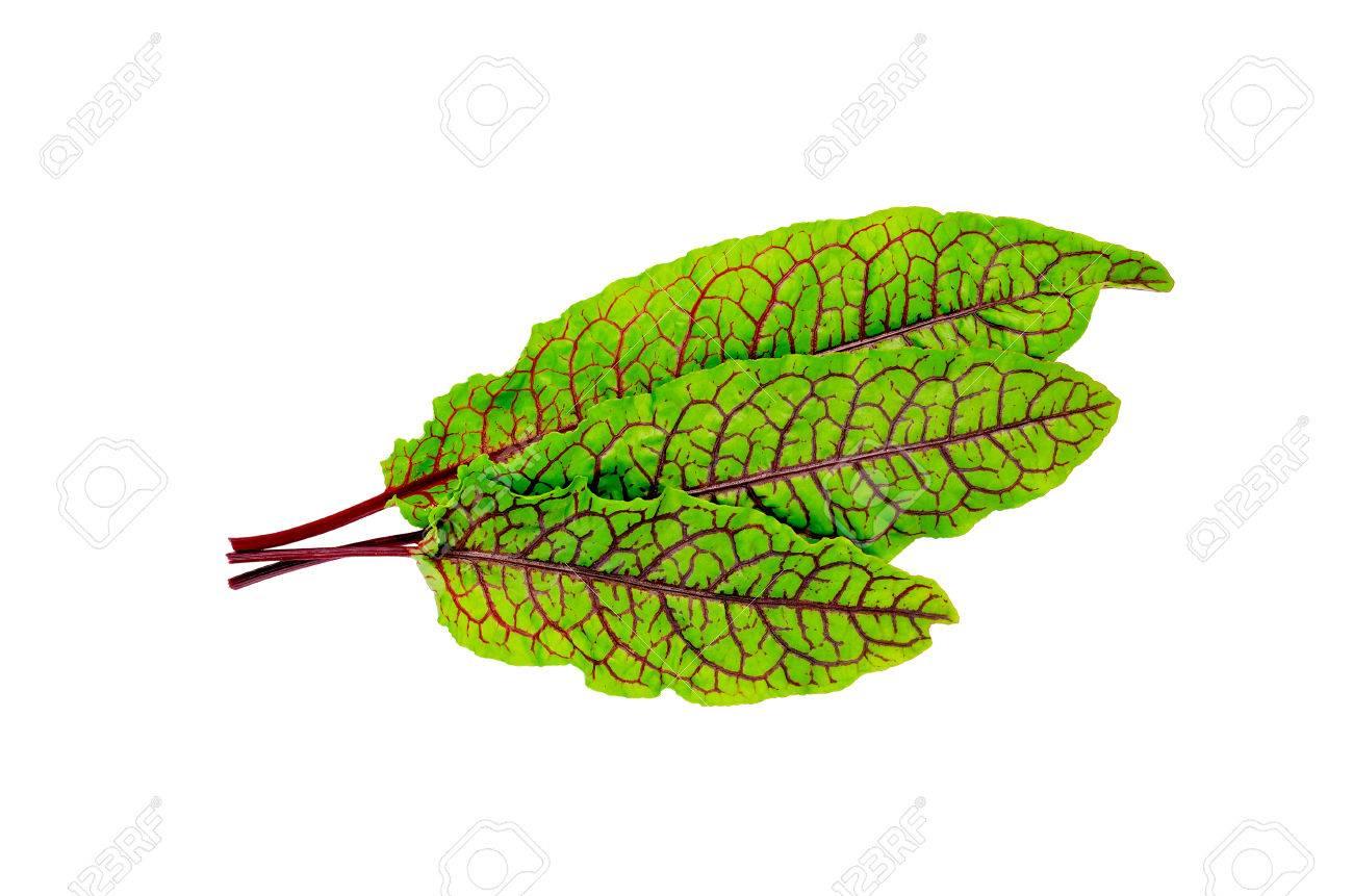 25285207-Trois-feuilles-d-oseille-vert-avec-des-veines-rouges-isol-sur-fond-blanc-Banque-d'images.jpg