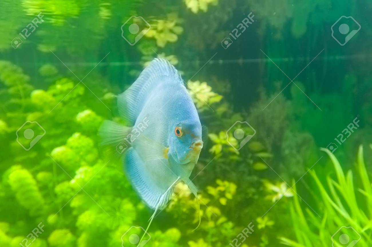 Beautiful colored fish Stock Photo - 19019249