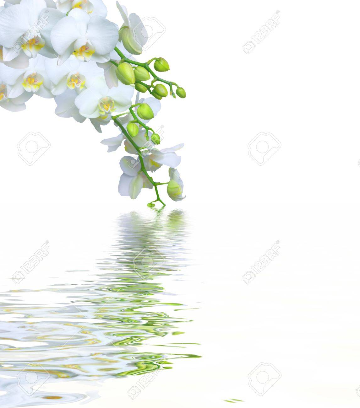 Beautiful white orchid flower phalaenopsis reflected in water with copyspace Stock Photo - 9344817
