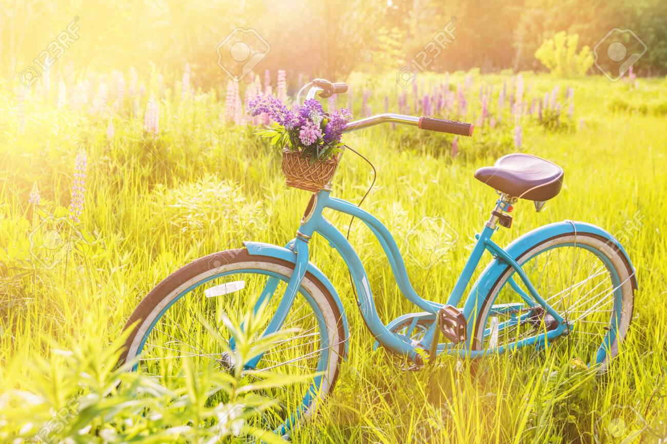 Vintage bicycle with basket full of flowers standing in the sunny field - 130662797