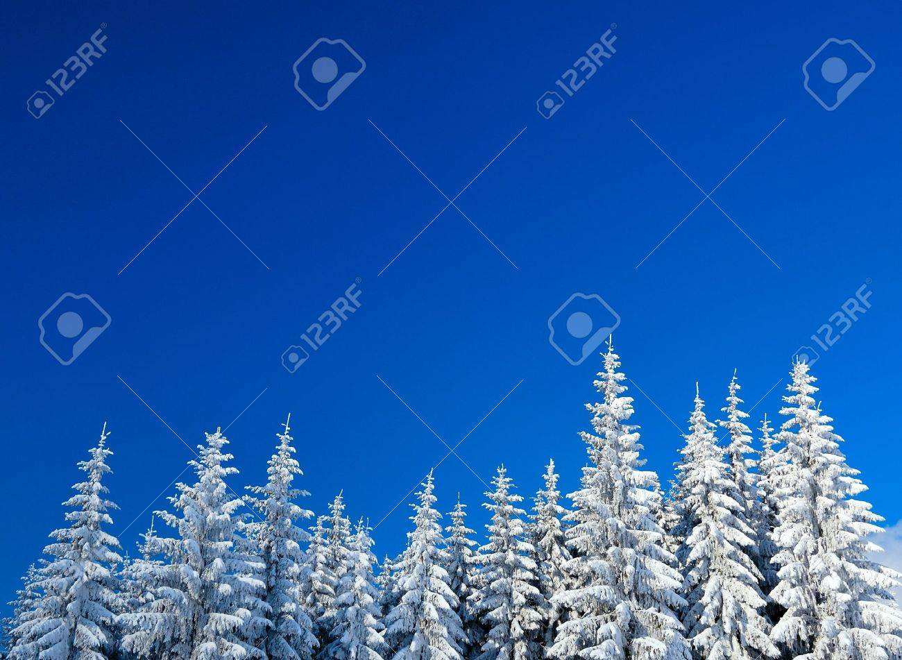 Winter Forest - 6512056