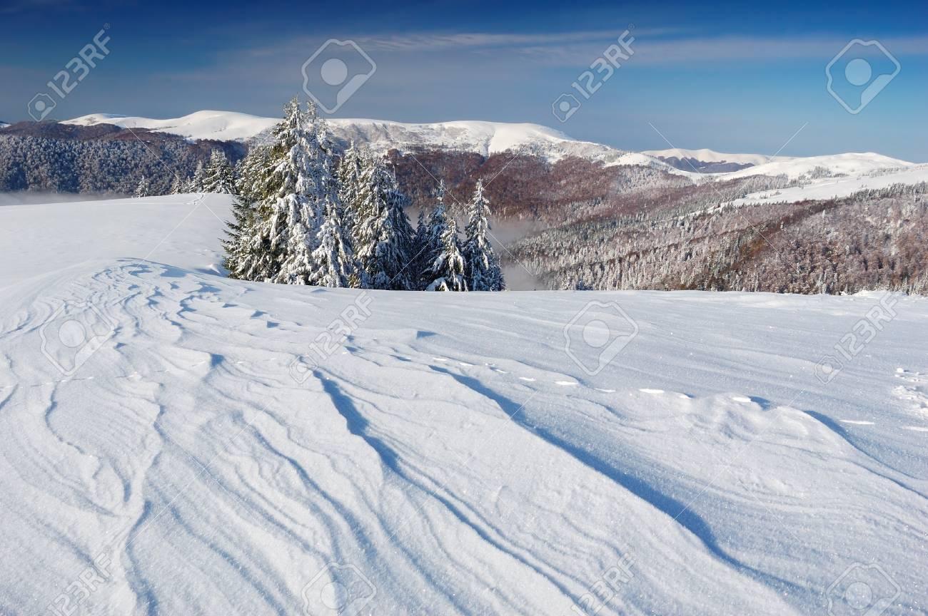 Winter landscape with fur-trees and fresh snow. Ukraine, Carpathians Stock Photo - 10910522