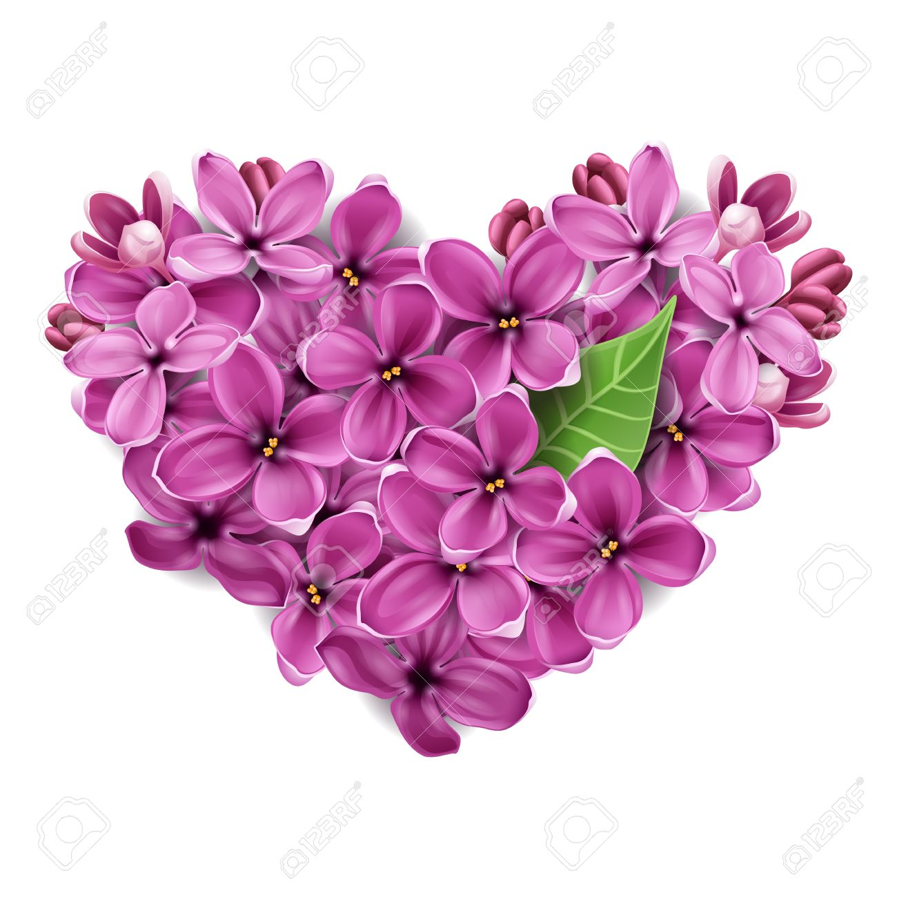 Flowers of a lilac in the form of a heart. An illustration on a theme of Valentine's day - 12076546