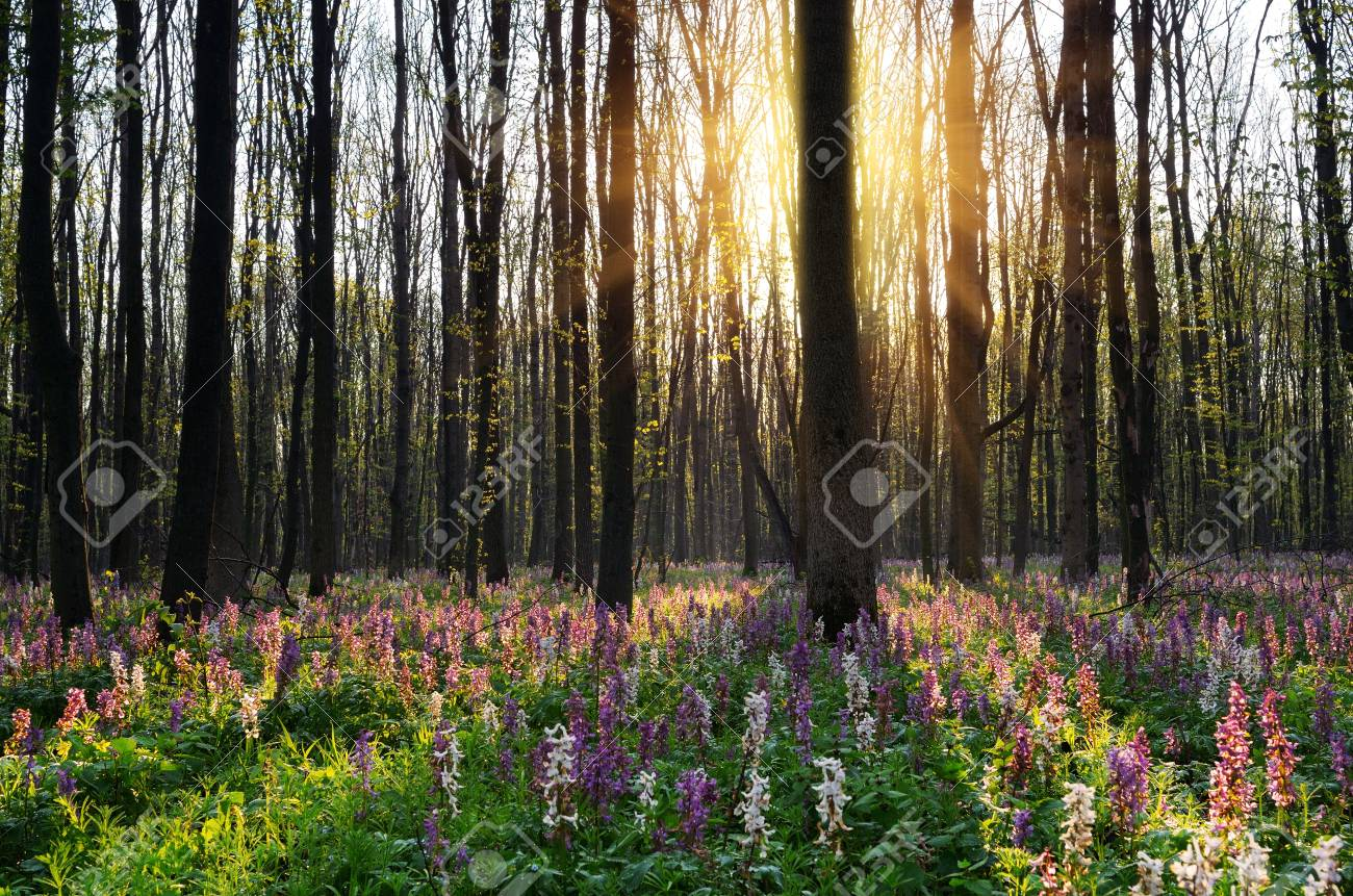 Spring Flowers In The Sun Woodland Spring Stock Photo Picture And