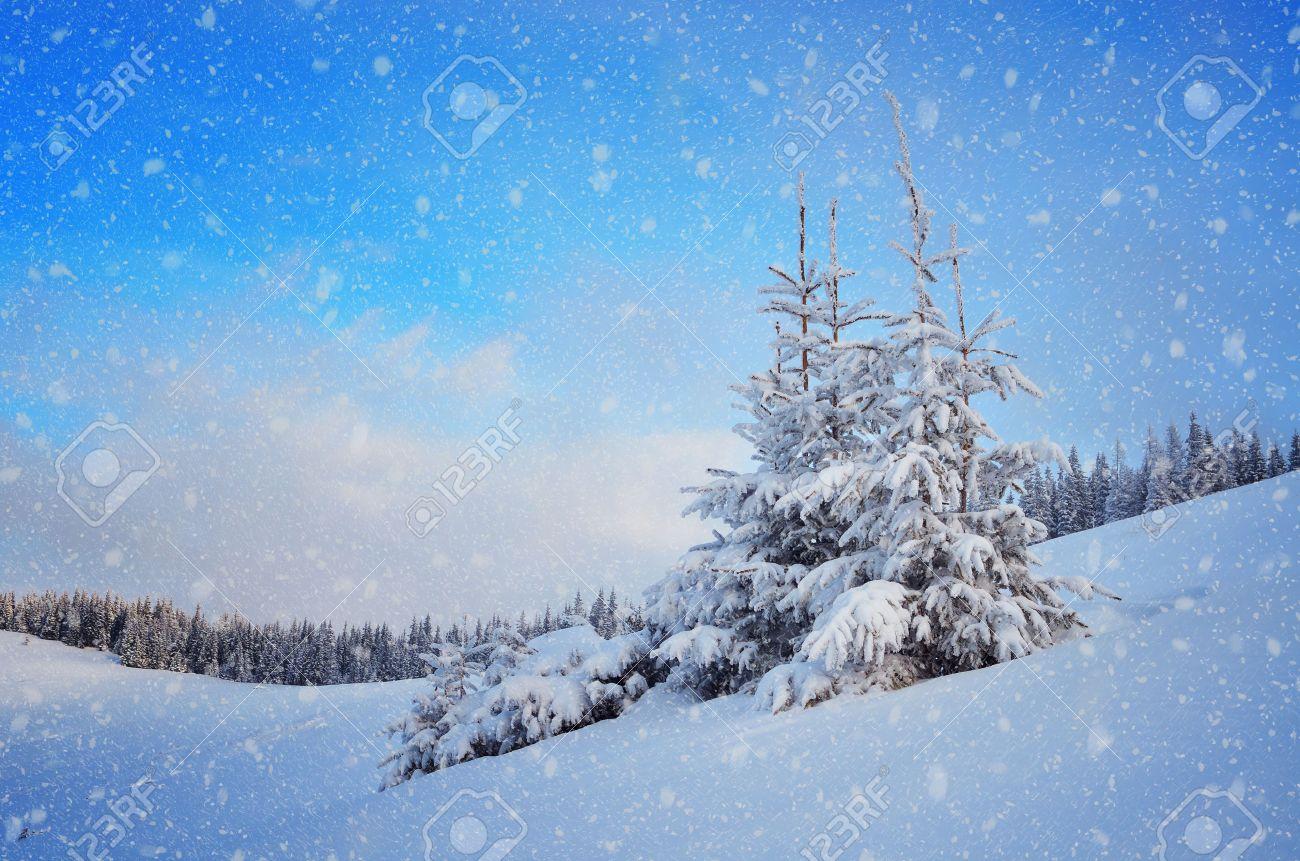Sapin recouvert de neige dans une vallée de montagne paysage de Noël Banque d'images - 22597829