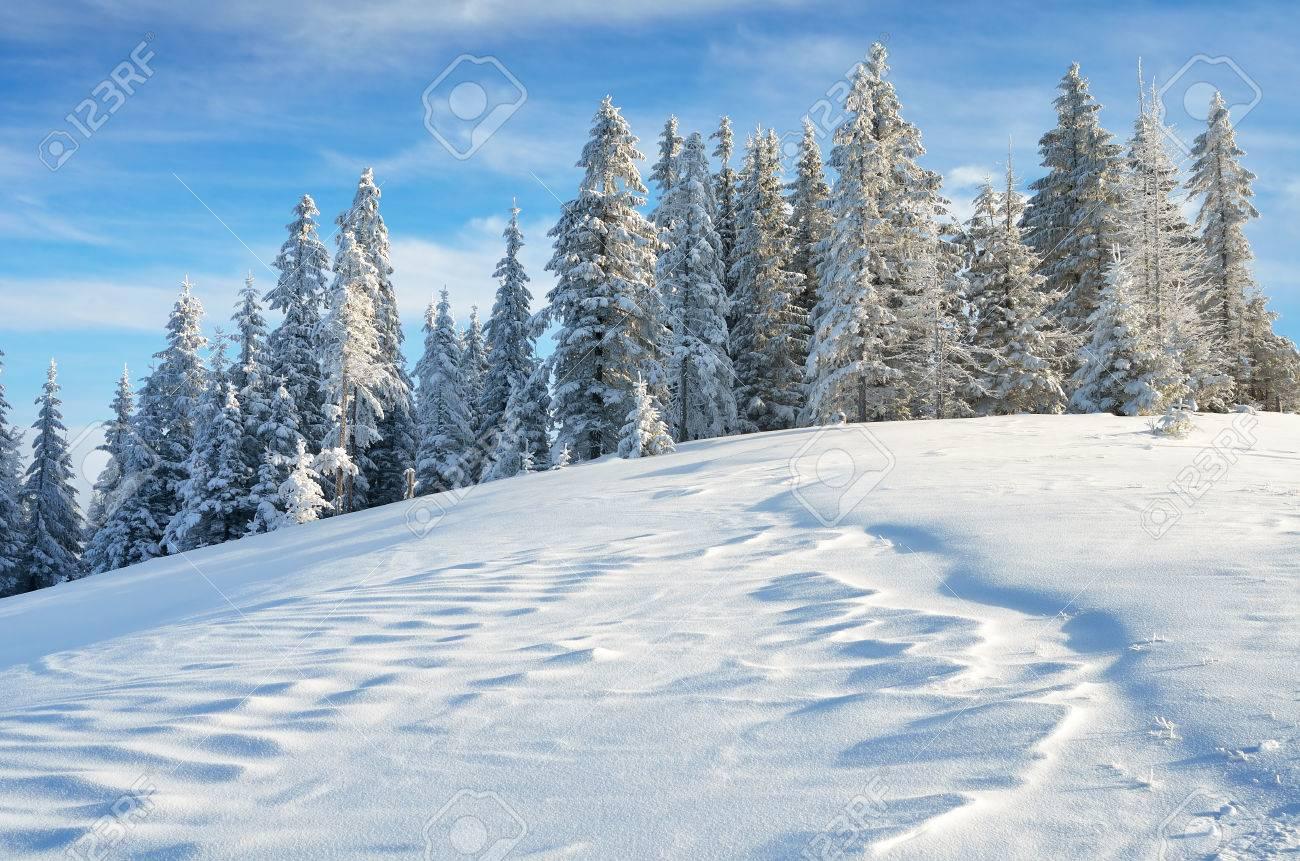 Paysage d'hiver avec la neige fraîche dans une forêt de montagne Banque d'images - 23799352