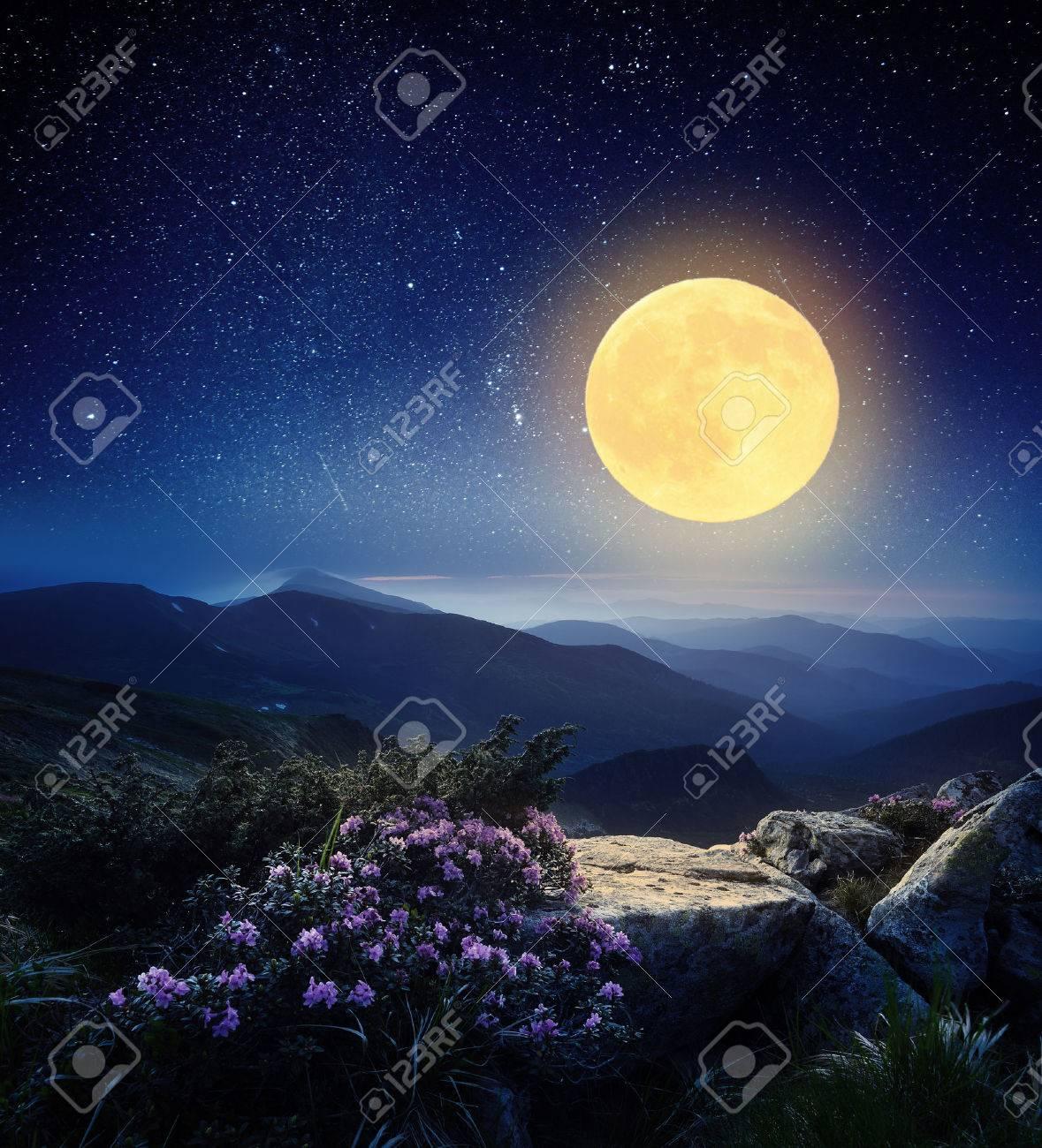 Paysage de montagne dans la nuit La lumière de la pleine lune des fleurs de rhododendron dans les montagnes Banque d'images - 29357461
