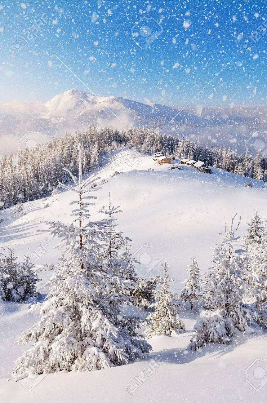 Paysage d'hiver avec le village de bergers dans une vallée de montagne. Les arbres dans les congères. Carpates, Ukraine, Europe. Vue du Mont Petros Banque d'images - 33419957